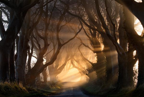chemin, arbre, lumiere