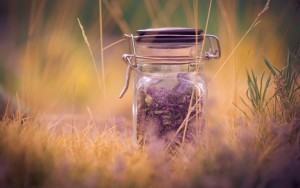 lavender-flower-essence-wide-wallpaper-563417