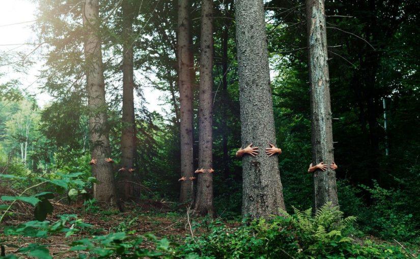 Les esprits des arbres